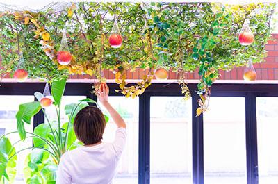 りんご狩りAプラン(天井型)